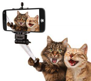 cats taking a selfie