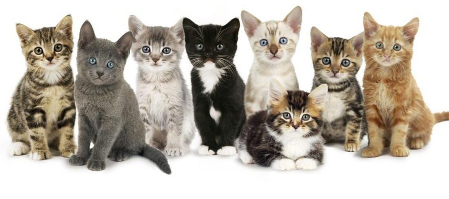 kittens lined up sitting